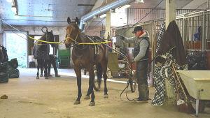 Hästar i Anders Ingmans stall i Sibbo
