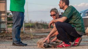 död kalv vid turkisk-bulgariska gränsen juli 2018