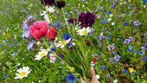 Kukkakimppu luonnonkukista.