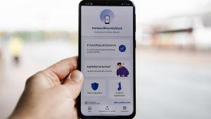 Kuvassa on puhelin, jonka ruudulla on Koronavilkku-sovellus elokuussa 2020.