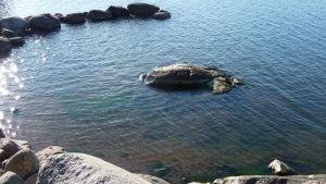 blått hav  vid en stenig strand, lite klippor, solreflexe i vattnet, solig dag i oktober