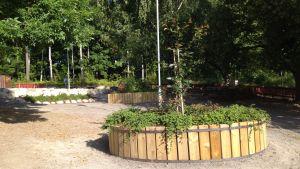Nya växter har planterats på Katarinaskolans skolgård i Karis.