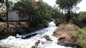 En förorenad flod där skum syns på ytan. Bilden är tagen nära Hyderabad