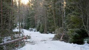 Trädet som fällts av stormen och orsakade strömavbrottet hos Agneta Glad.