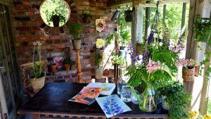Huone jossa om kasviksia ja maalauksia