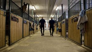 Ratsupoliisit Timo Kossila ja Jukka Aarninsalo kävelevät tallikäytävää selin kameraan. Yksi hevonen kurkistaa pilttuustaan.