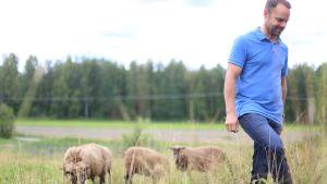 En man går på en äng med får