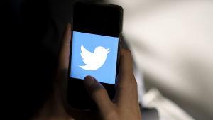 Twitters logotyp med en vit fågel mot en blå bakgrund visas på en mobiltelefons skärm.