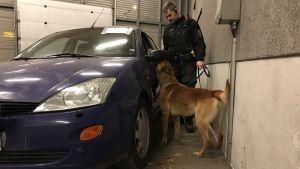 Hundförare Björn Borg över eftersök med polishunden Nasu.