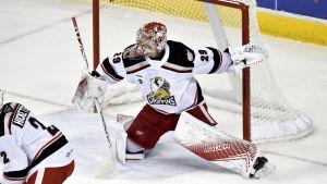 Harri Säteri spenderade hela säsongen i AHL-klubben Grand Rapids Griffins.