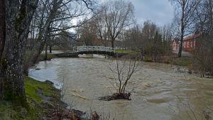 Lovisa å rinner genom en park. Över ån går en träbro. Gräset är grönt och vattenståndet är mycket högre än normalt.