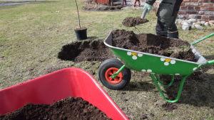 En grön blommig skottkärra med jord, en spade ses skyffla jord i en grop i gräsmattan