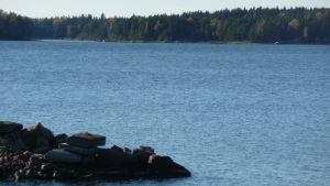 skärgårdsvy en solig dag i oktober. Blått hav, några stenar i förgrunden, skogbeklädd holme i bakgrunden