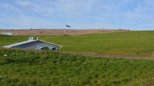 Käringmossens gamla soptipp är täckt med grön gräsmatta.