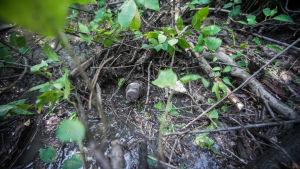 En bäck med mycket grenar. En plastflaska sticker fram ur bråtet.