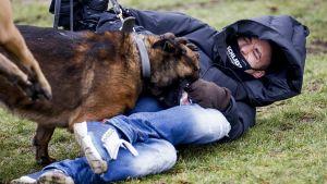 En polishund attackerar en demonstrant.