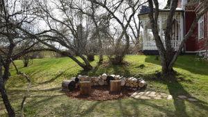 Sluttning med knotiga träd nedanför Strömsövillan