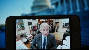 Smittskyddschefen Anthony Fauci förhördes av senaten via video.
