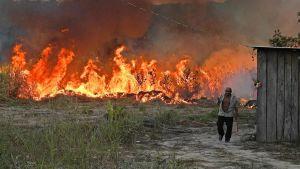 En jordbrukare med mark som brinner bakom honom i Amazonas.