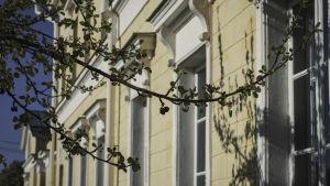 Gul stenhusfasad, vita fönsterkarmar. I förgrunden körsbärsträd