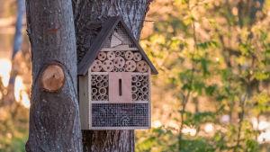 Ett insekthotell som hänger i ett träd. Med flera rum.