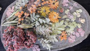 Kanderade bär och blommor på ett fat