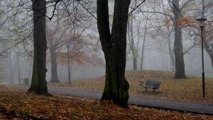 En ensam parkbänk i en dimmig park bland högra mörka träd