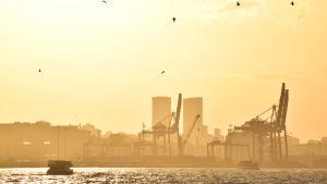 Istanbul badar i morgonsol. Kranar i hamnen