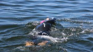 En man med våtdräkt simmar i havet.