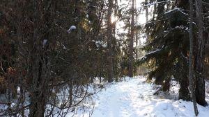 En vintrig skogsstig.