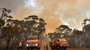 Brandbilar och brandmän framför en brinnande skog