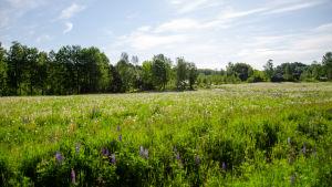 En vy över en äng mot Svartån där en ny friluftsled ska byggas i Billnäs.