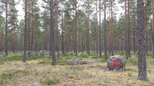 En skog med tallar och en sten med en målad röd triangel och texten KP1.