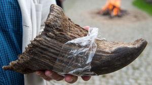Ett noshörningshorn i en hand.