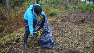 Kvinna fyller sopsäck med trädgårdsavfall.