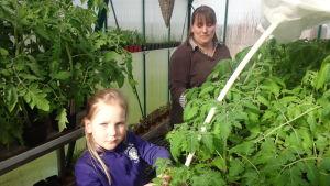 Anna Holmberg tillsammans med sin dotter Julia Strömberg bland tomatplantorna i Tenala.