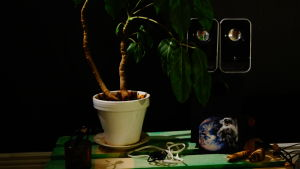 pöydällä mm kasvi kukkaruukussa