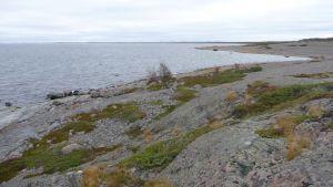 Mosstäckta klippor ute på Jurmo i den åboländska skärgården.