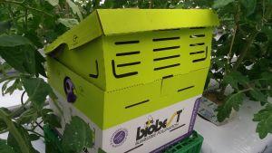 En papplåda i ett växthus. Inne i lådan finns ett bo med humlor.