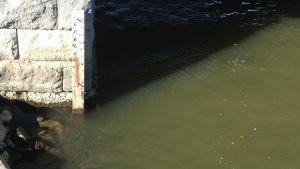 Lågt vattenstånd visar mätaren under Brändöbro i Vasa