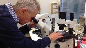 John Eriksson, professor i cellbiologi vid ÅA