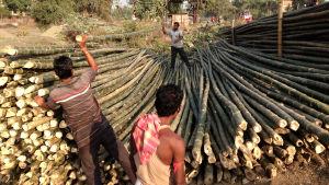 Bambujen lajittelua tienvarressa