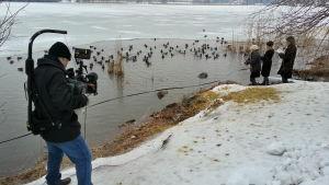 Kuvaaja seuraa sorsien syöttämistä Töölönlahden rannalla.
