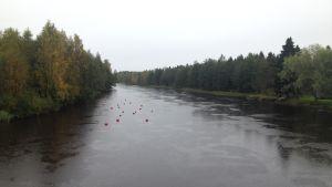 Perho å i Rödsö i Karleby.