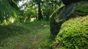 En grön skogsstig i Hallis, Åbo