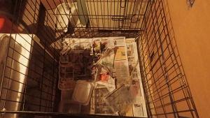 Hundvalparna förvarades i en kall källare där golvet var täckt av avföring.