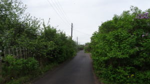 En smal asfalterad väg kantad av gröna buskar som leder till en datja..