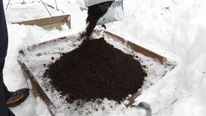 Jord som hälls ur en påse i en odlingslåda i vinterväder, som förberedelse av vinterodling.