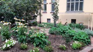 Höstlig växtrabatt med stenparti på asfalterad innergård av gult hus.