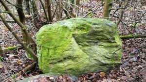 Vihreä kivi metsässä.